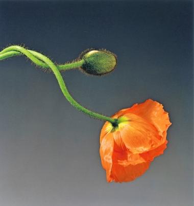Naturaleza, flor